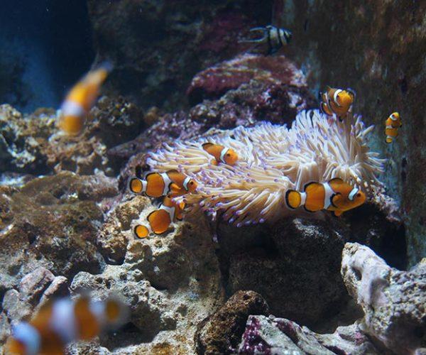 acquario-di-livorno-3